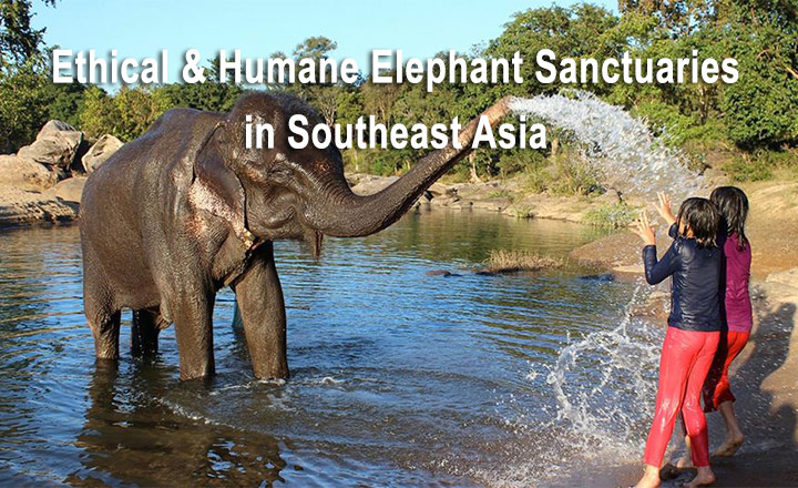 Ethical & Humane Elephant Sanctuaries in Southeast Asia